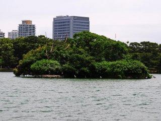 Một hòn đảo đầy cây xanh giữa hồ. Tôi đã phát hiện vài chú chim lớn ở gần hòn đảo.