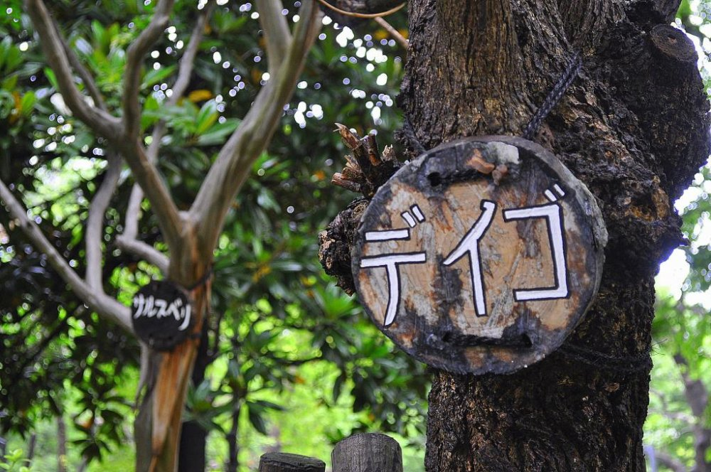 Wooden signs mark some of the trees