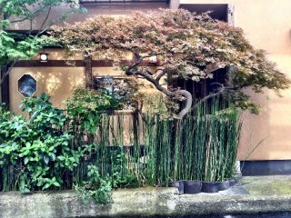The tiny but elegant garden