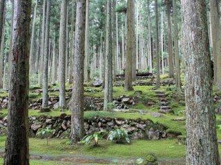 코케무시로 카페 주변의 숲길