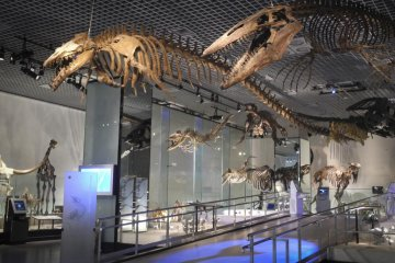 Морской динозавр