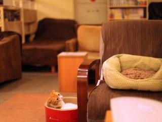 Chú mèo buồn ngủ đang ngắm ly trà hoa nhài của tôi - mọi thức uống ở đây đều có giá ¥350