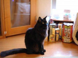 Những chú mèo trông oai vệ không hề rẻ chút nào; 30 phút là ¥600