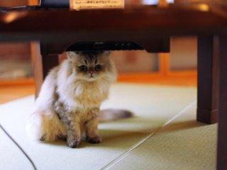 Chú mèo Acorn, ngồi dưới những chiếc máy vi tính dành cho khách hàng