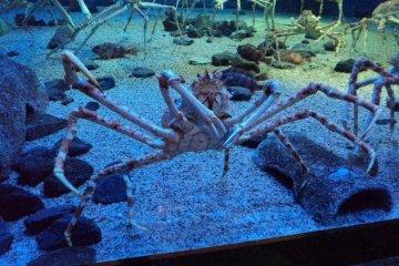Osaka Aquarium (Kaiyūkan)