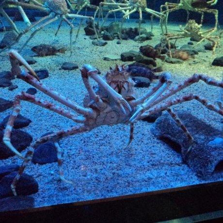 Osaka Aquarium (Kaiyukan)