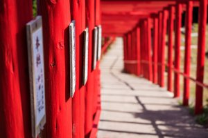 Inside the twisting tunnel of torii