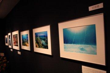 东京岛屿·海洋生物摄影展