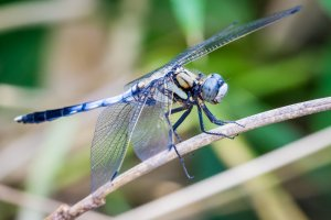 Dragonflies, butterflies, birds, beetles, and other creatures can easily be found on hikes