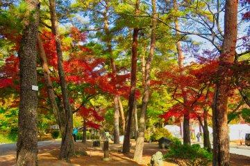 Tsukinoishi Momiji Park