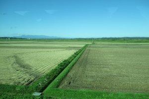 Сжатые поля Мияги