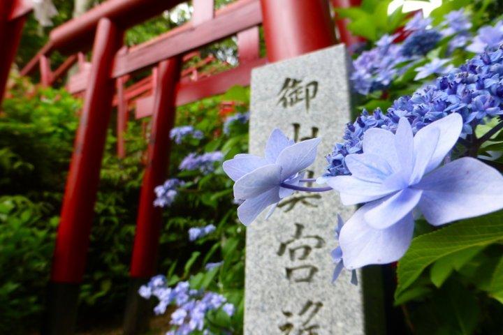Hiroshima's Hillside Torii Gates