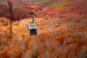 Hakkoda Ropeway พาคุณชมความงามของใบไม้เปลี่ยนสีแบบสบายๆ