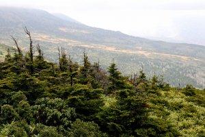 บางส่วนของภูเขาใบไม้ก็ยังไม่เปลี่ยนสี