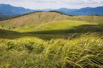 Grasses sing in the wind before a hillside covered in limestone pinnacles