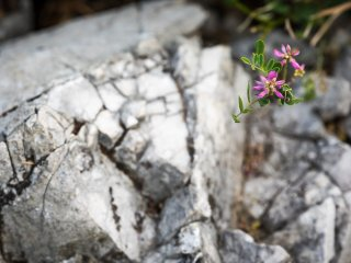 Tiny wildflowers grow out of this rock along the path