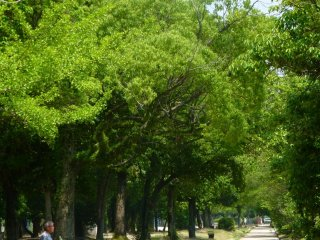 With shady trees and lots of park benches, the walk around the Hiroshima castle is perfect for an afternoon stroll