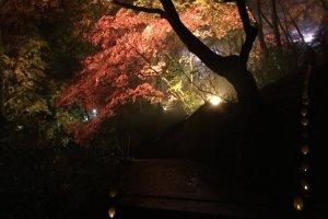 Pohon-pohon yang sama menyala di malam hari untuk acara jazz