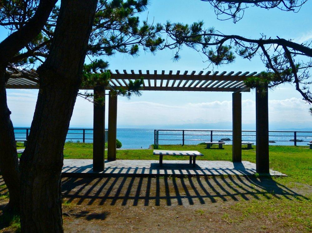 葉山公園は、松林に囲まれた海辺の公園である