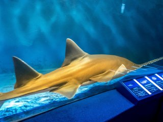 Don't be surprised to see several species of sharks swimming by with some measuring over three meters in length