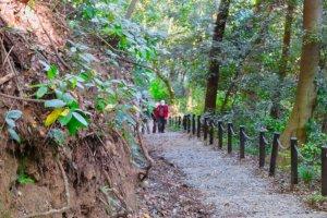 Trail up to Castle Park