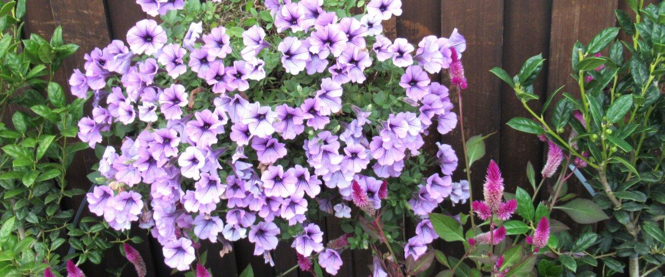 Цветы, украшающие кафе снаружи