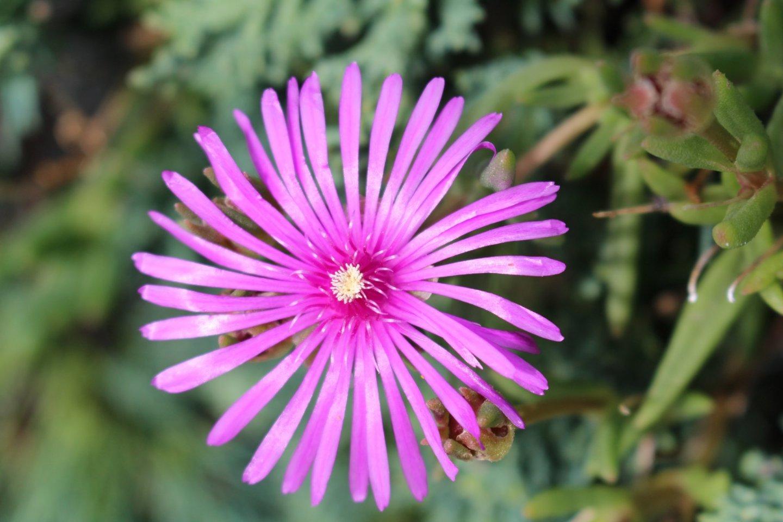Очень мелкие, но радостные цветы