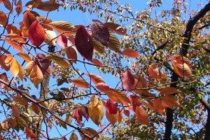 Kameidoryokudo Park - Tree leaves