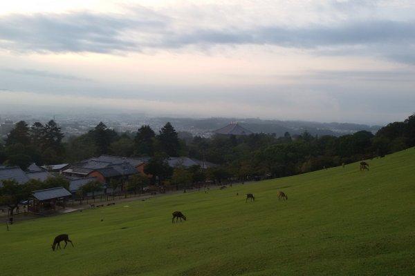 位于奈良公园东侧的若草山