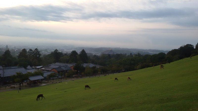 位於奈良公園東側的若草山