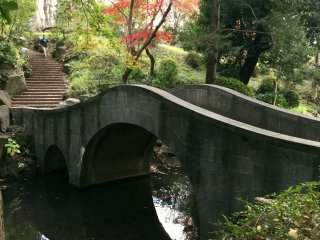 A rustic bridge and lush forest in the city