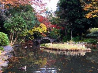 The dormant iris garden