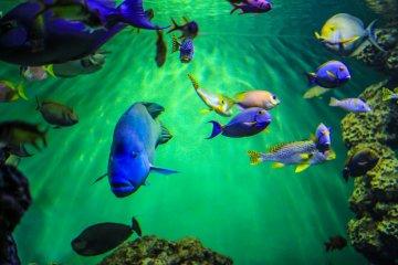 No fish is short of colour in this aquarium