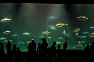 The breathtaking 2,200-ton pelagic tank