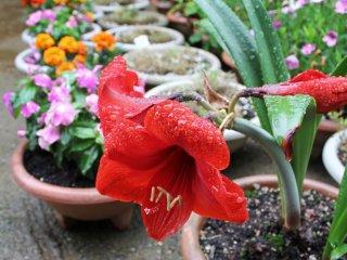 절을 둘러싼 아름다운 자연과 함께, 절 관리인이 여러가지 꽃들로 절을 한층 더 아름답게 꾸며 놓았다.