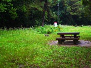 A cat in the grass guarding the Odo Daijingu shrine