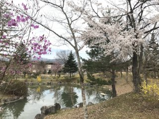 Sắc hồng, tím và vàng tràn ngập vào mùa xuân