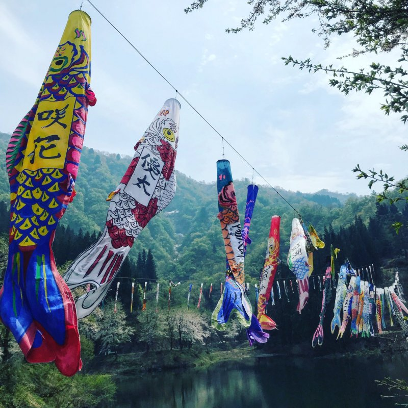 The koinobori flags here in spring are so bright and colorful