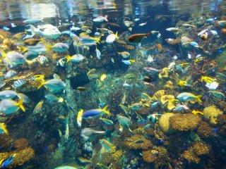 มาตื่นตาตื่นใจกลับโลกสมมุติใต้ทะเล ที่คุณสามารถจินตนาการได้ว่ากำลังแวกว่ายกับฝูงปลาในมหาสมุทรแปซิฟิก!