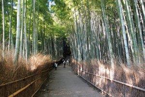เข้าถึงธรรมชาติพร้อมเสพความงามของวัฒนธรรมญี่ปุ่นได้ในคราวเดียว ที่เขตอะระชิยะมะ
