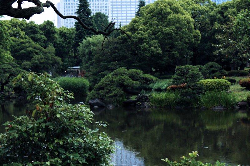 여름철은 히비야 공원을 가득 채우는 나무와 덤불에서 달콤한 초록색을 이끌어낸다