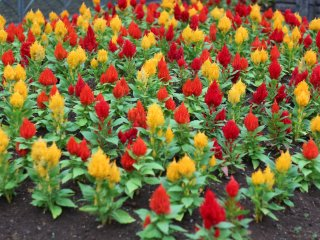 Colorful flower beds are bountiful in the park.