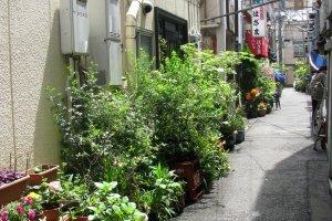 Комнатные растения возле домов