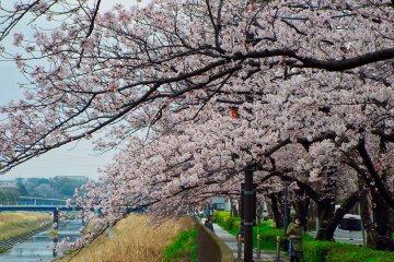 Канал, пролегающий на юг от станции Тоцука
