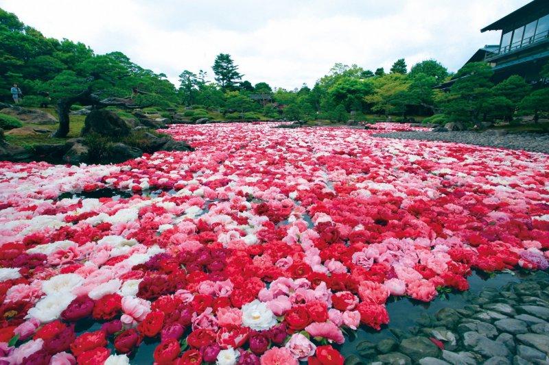 Peonies in season, Yuushien Gardens