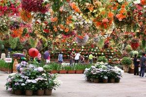 Bird and flower garden, Matsue Vogel Park