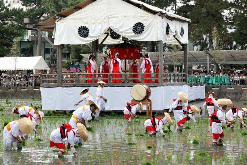 As danças são executadas num palanque construído sobre o campo de arroz. O tambor taiko está ao nível dos plantadores, marcando o ritmo da actividade.