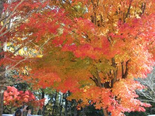 A colorful canopy of leaves