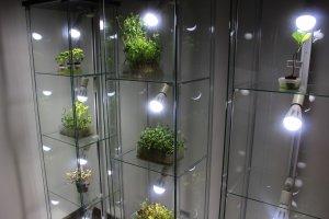 室内供养植物