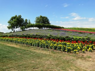 Un paysage multicolore